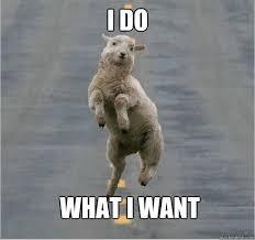 I Do What I Want Meme - i do what i want dancing sheep quickmeme