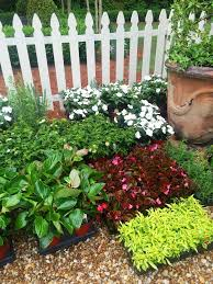 Summer Gardening - 196 best plant combinations images on pinterest plants flower