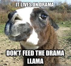Internet Drama Meme - teacher moved your desk our love never had a chance drama llama