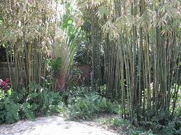 Bamboo Backyard Landscape Fence Landscape Arrangement With Bamboo Landscaping