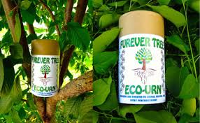 win a furever tree eco urn from the collar project catster