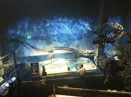 dinosaur picture of perot museum of nature and science dallas
