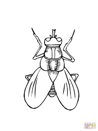 awesome free fly insect coloring pages for kids printable
