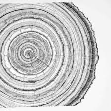 tree ring coloring page kids drawing and coloring pages marisa