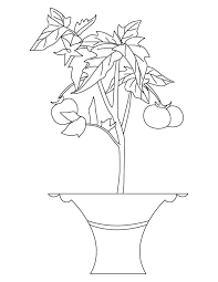 tomato plant coloring download free tomato plant