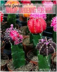 indoor cactus garden 17 best 1000 ideas about indoor cactus garden