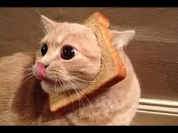 Cat In Bread Meme - funny bread cat videos compilation 2013 youtube