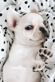 Cute Dog Products by 195 Best Animals Images On Pinterest Animals Puppies And Dogs