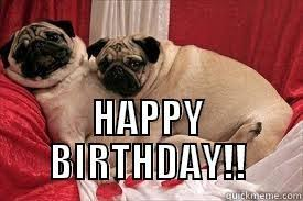 Pug Birthday Meme - pug funny birthday memes funny best of the funny meme