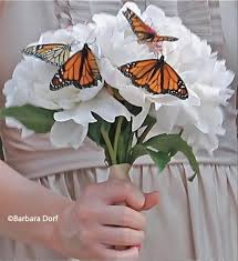 66 best butterfly weddings images on marriage
