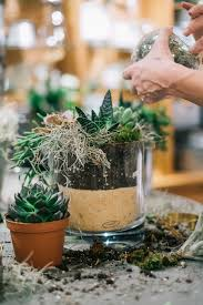 succulent house getting hands on with succulents pottery barn