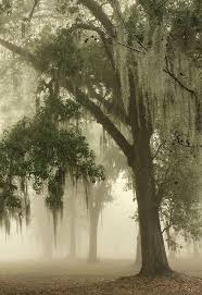 Louisiana travel trunks images Spanish moss new orleans louisiana the best travel photos jpg