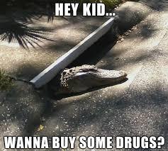 Gator Meme - shady gator meme on imgur
