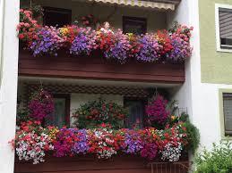 balkon blumen balkonblumen mein garten