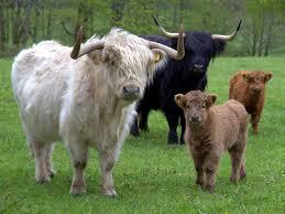 cattle breeding software zooeasy online