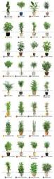 Cascading Indoor Plants by Top 25 Best Apartment Plants Ideas On Pinterest Air Cleaning