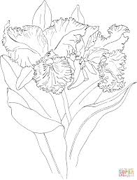 coloring pages of orchids coloring page to view printable