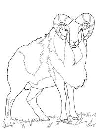 wild sheep mouflon coloring free printable coloring pages