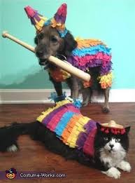 Animal Halloween Costume 25 Party Animal Costume Ideas Animal
