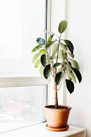 home interior plants green thumb our favorite indoor plants to grow in your home
