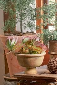 85 best suculentas kalanchoe images on pinterest succulents