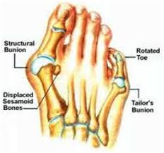 Foot Tendons Anatomy 10 Pictures And Images Medical Doctoral Accurate Detailed Foot