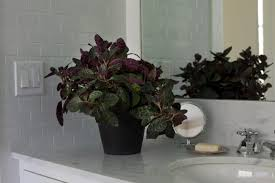 indoor plants that need no light houseplants low light guide free download wiring diagrams