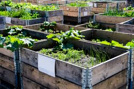 Making A Raised Bed Garden From Roof Panels 25 Diy Raised Garden Beds Corrugated Metal Wood Galvanized