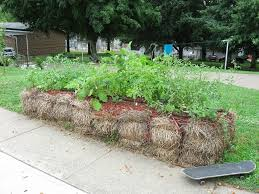 about tomato mulch u2013 when and how to mulch tomatoes