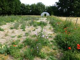 wild flowers in wild meadows are birds or rabbits a problem when creating a wild flower area