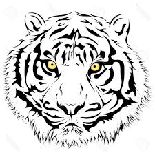 tiger drawing outline 9 pics of tiger outline coloring page cute
