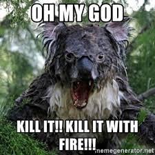 Koala Bear Meme - koala bear meme kill it with fire image tips