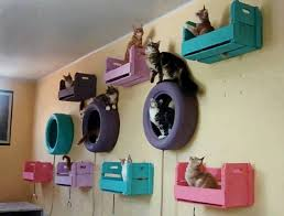 Wall Shelves For Cats Best 25 Cat Gym Ideas On Pinterest Diy Cat Tower Cat Condo And