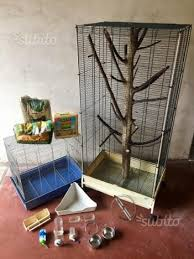 gabbie scoiattoli gabbia per scoiattoli roditori voliera animali in vendita a teramo