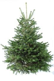 real christmas trees for sale collection decorated christmas tree sale pictures home design