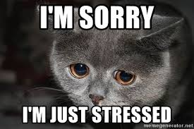 I Am Sorry Meme - i m sorry i m just stressed sadcat meme generator