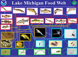 Michigan what travels through a food chain or web images The habitable planet unit 4 ecosystems online textbook jpg