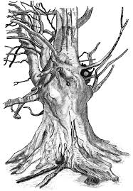drawn roots tree sketch pencil and in color drawn roots tree sketch