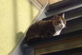 gerüche die katzen nicht mö uringeruch hunden und katzen entfernen frag mutti