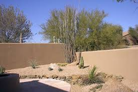 ideas for desert landscaping on the small backyard planted with