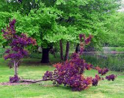 red oak tree growing sideways in fdr park love u0027s photo album
