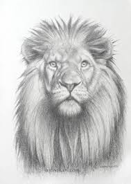 171 best lion u0027s images on pinterest realistic drawings drawings