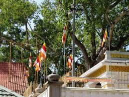 Flag With Tree And Moon Aniccasight The Oldest Maha Bodhi Tree Anuradhapura