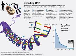 dna mapping breakthrough map your dna for 1 000