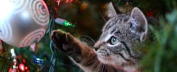 how to keep your cats and christmas trees safe petplace