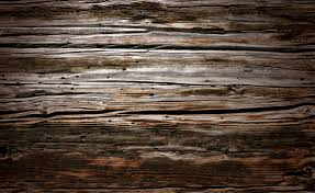free images nature branch texture plank floor trunk