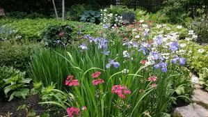 fairhill native plants june 2016 gardenopolis cleveland