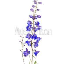 delphinium flowers wholesale delphinium flowers delphinium flower arrangements