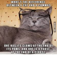 Comma Meme - what s the difference between a cat and a comma one has its claws