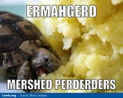 Turtle Meme - image turtle meme ermahgerd mershed perderders eating mashed